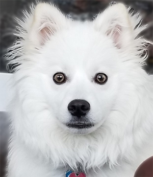 Image of dog